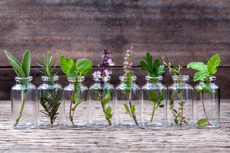 51663211 - bottle of essential oil with herbs holy basil flower, basil flower,rosemary,oregano, sage,parsley ,thyme and mint set up on old wooden background .
