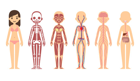 43965558 - stylized female body anatomy chart: skeletal, muscular, circulatory, nervous and digestive systems. flat cartoon style.